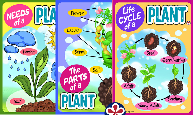 Printable Plant Science Posters for Use with Young Students