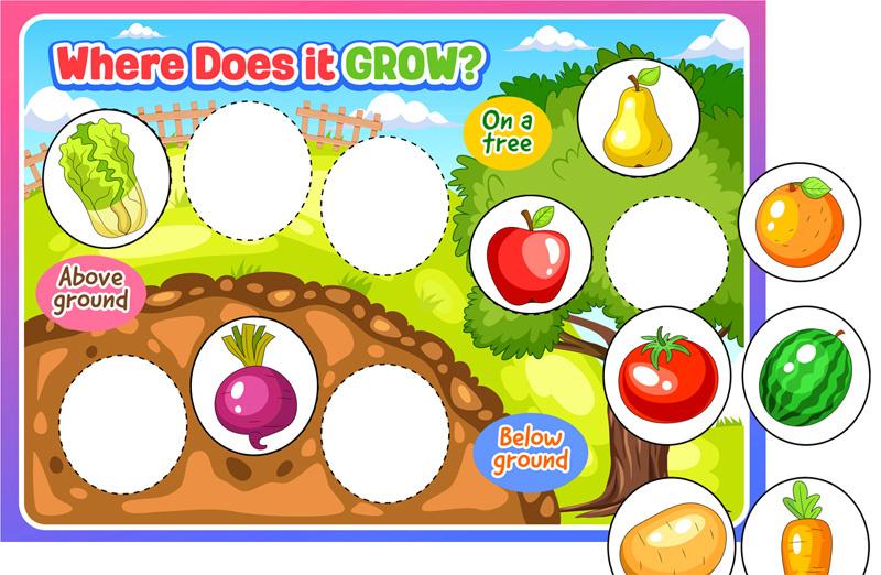 Where Do Fruits And Vegetables Grow? Matching Worksheet. TeachersMag.com