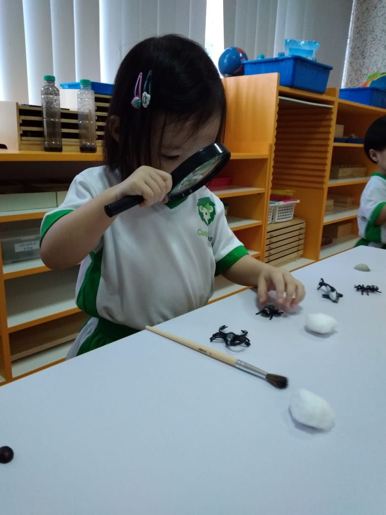 Insect hunt in the Classroom