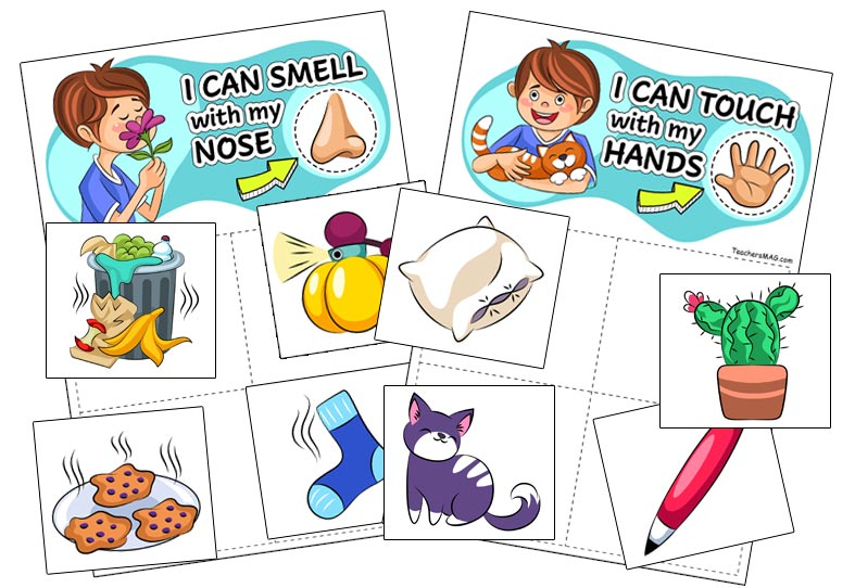 Five Senses Sorting Activity for Preschool, Pre-K, and Kindergarten Students