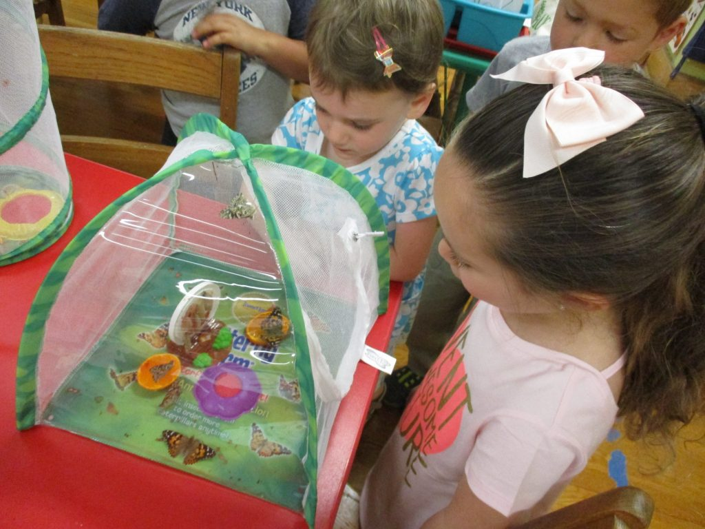 Butterflies-Themed Activities