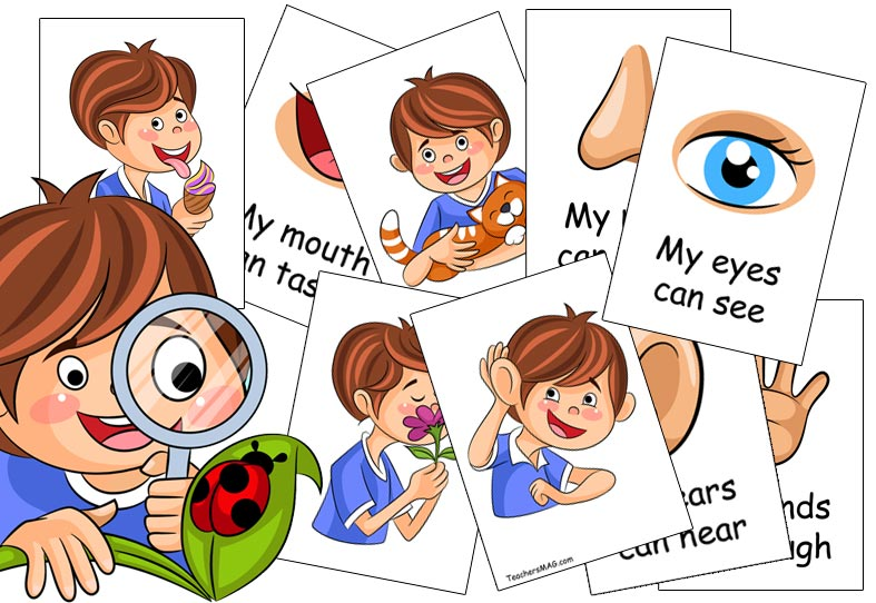 Five Senses Activity for Preschool Students