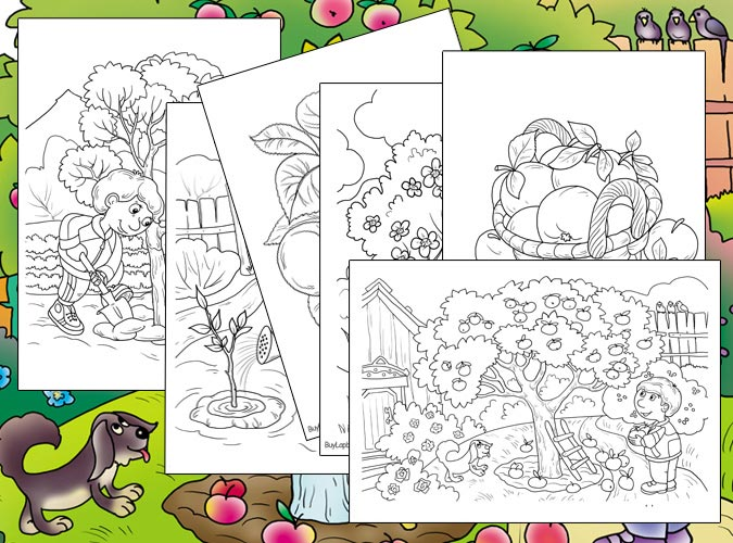 Apple Tree. Apple Life Cycle Coloring Pages