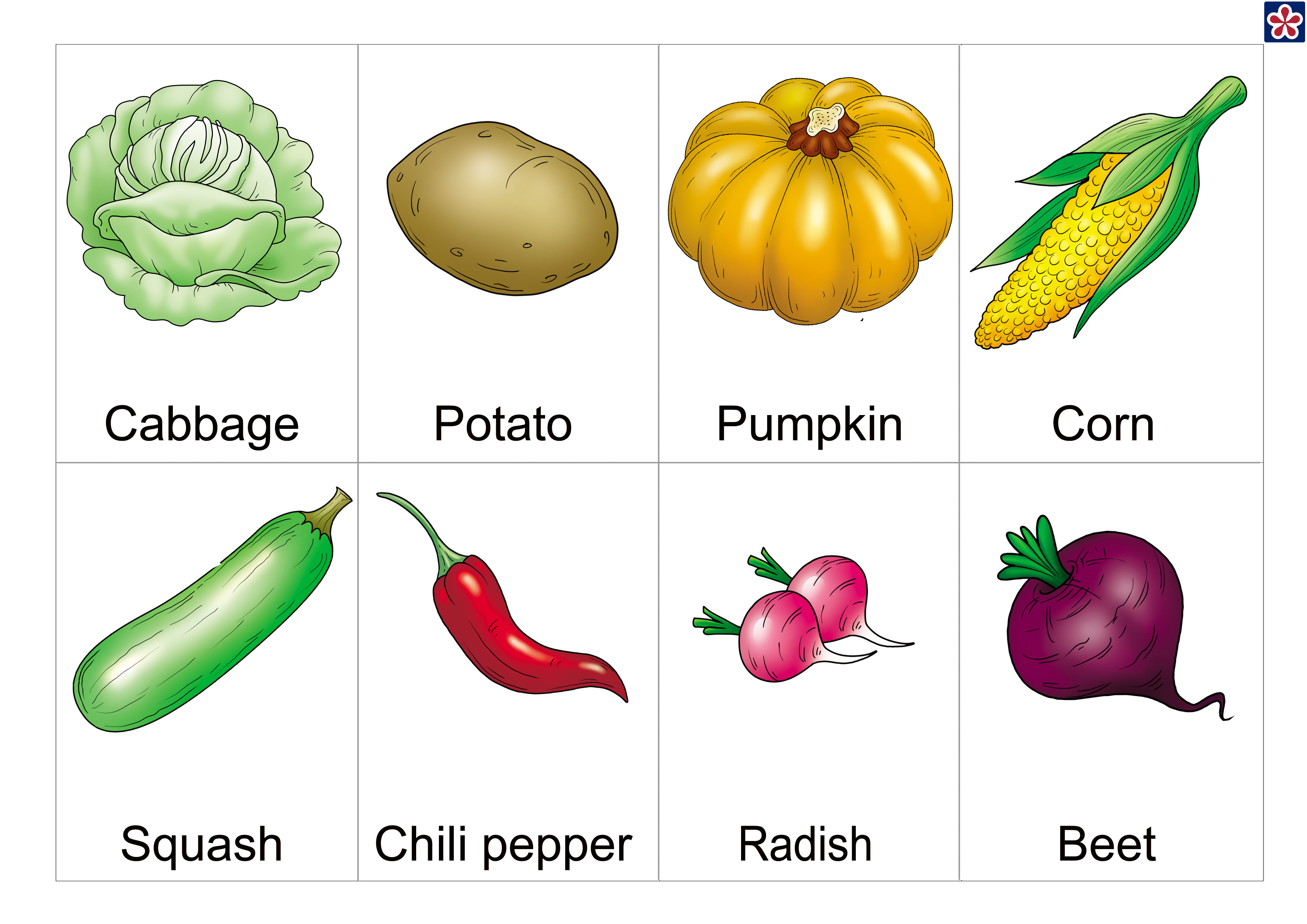 It's just a graphic of Remarkable Printable Pictures of Vegetables