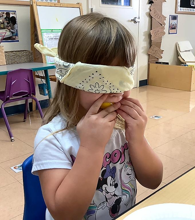 Preschool Activities That Feature the Five Senses