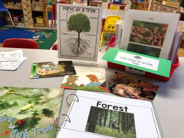 Oak Tree Science Activities for Preschool