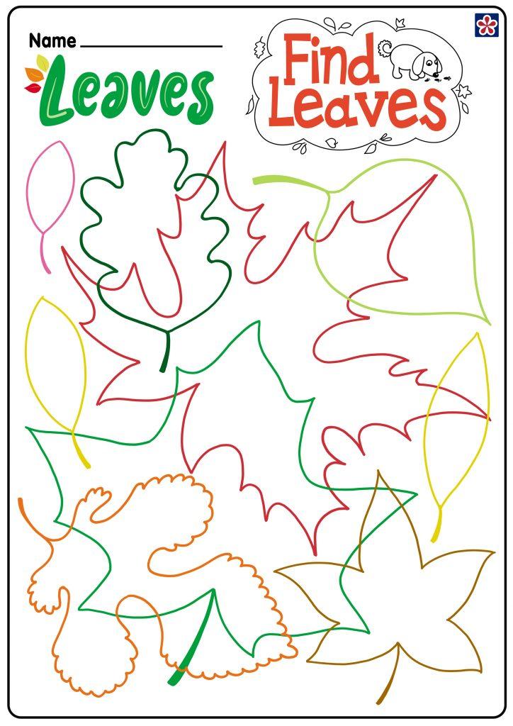 Find Leaves Worksheet