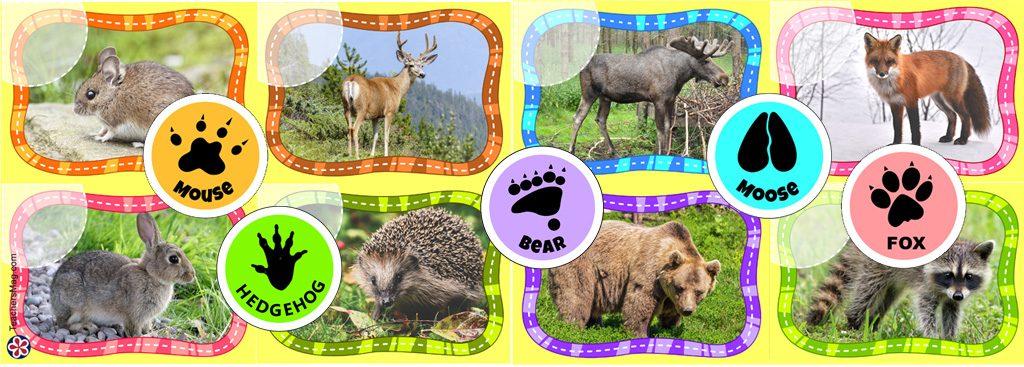 Animal Tracks Printable Activity for Kids