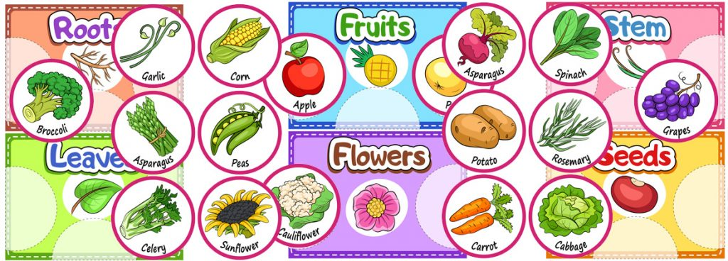 Printable Sorting Activity About the Parts of the Plants We Eat