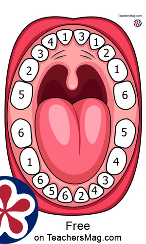 Teeth-Covering Printable