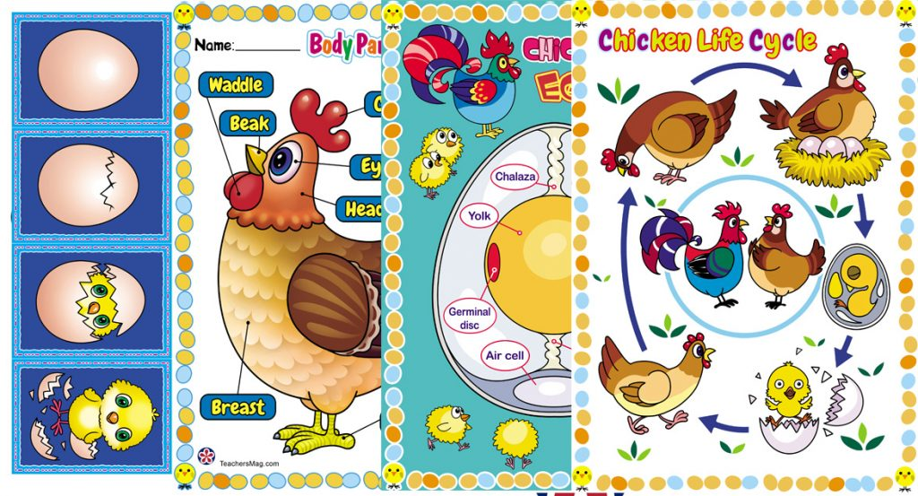 Chicken-Themed Posters for Display in the Classroom