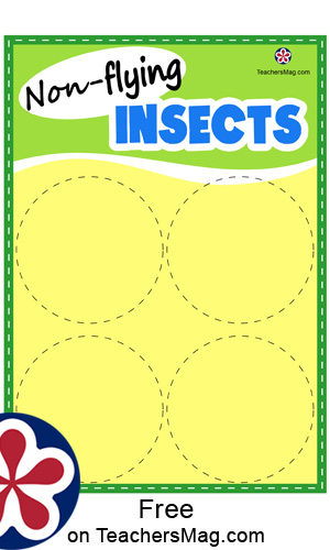 Insect Matching Activity for Young Children