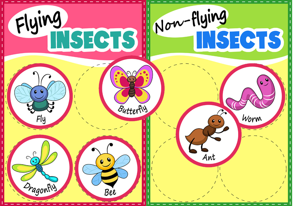 Insect Matching Activity Printable