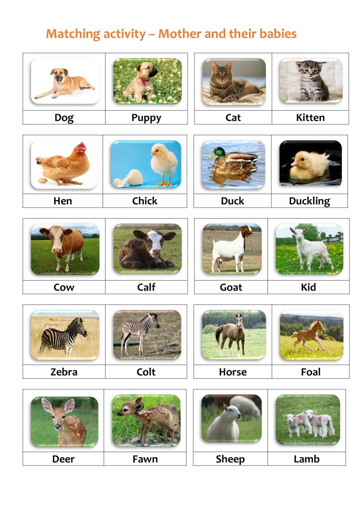 Matching Activity - Animals and Their Young
