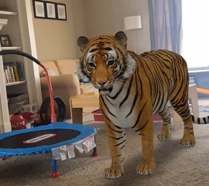 Google 3D Animals Into Your Home