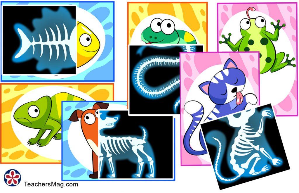 Animal X-Rays Printable Matching Activity