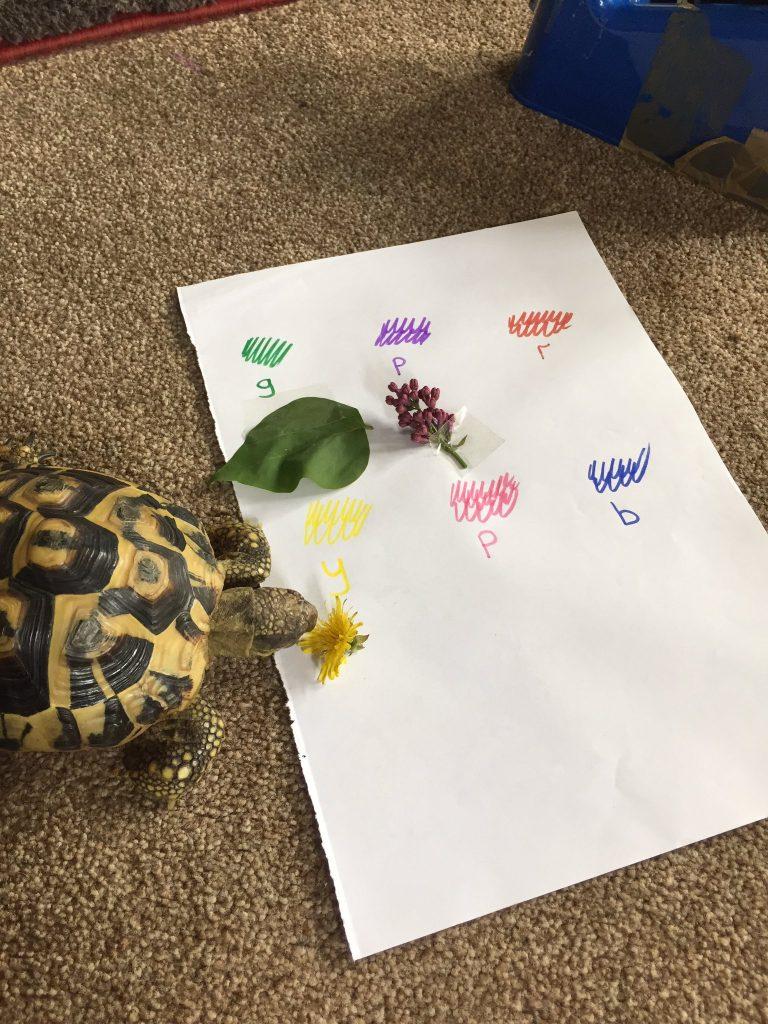 Color Search Activity For Preschool Students