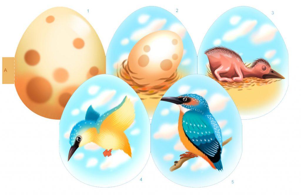 Life Cycle of Birds Printable for Kids